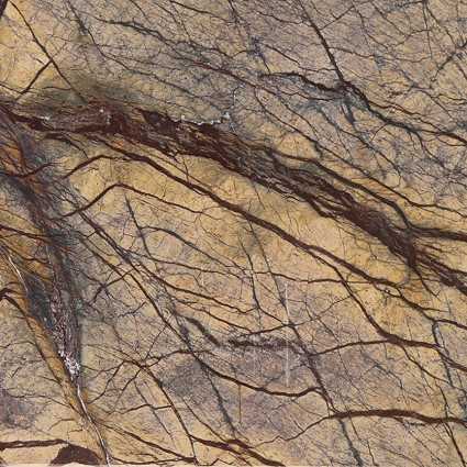 "Rain Forest Brown ( Cafe Forest ) Marble Tile 12""x12"""